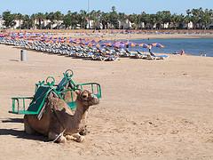 Caleta De Fuste Fuerteventura Kanariansaaret source:http://www.flickr.com/photos/federhirn/4228430909/