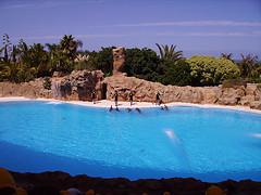Puerto De La Cruz - Teneriffa - Source: http://www.flickr.com/photos/javipelaez/3818546626/