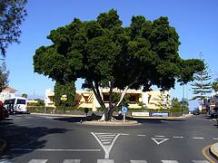 San Augustin Gran Canaria matkat source:http://www.flickr.com/photos/dee_/937655322/